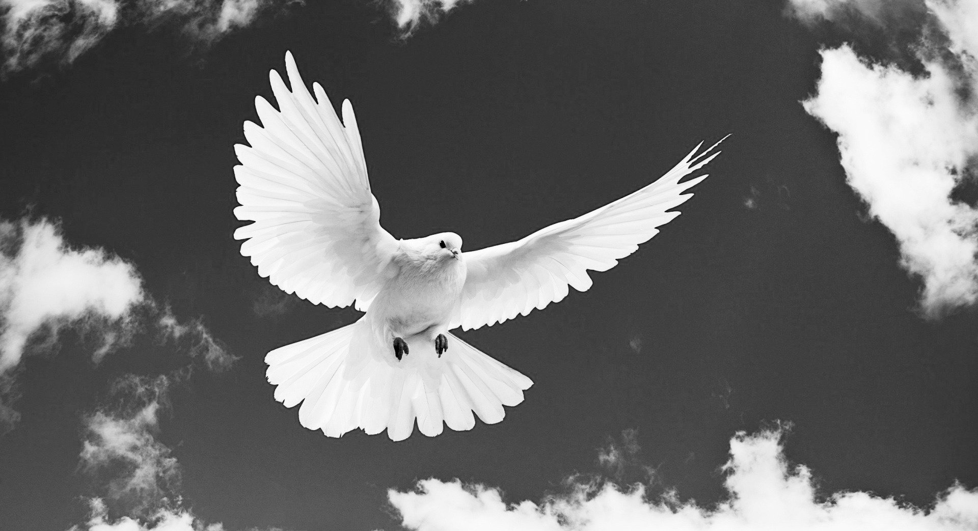 dove-flying-innercomm.net-peace